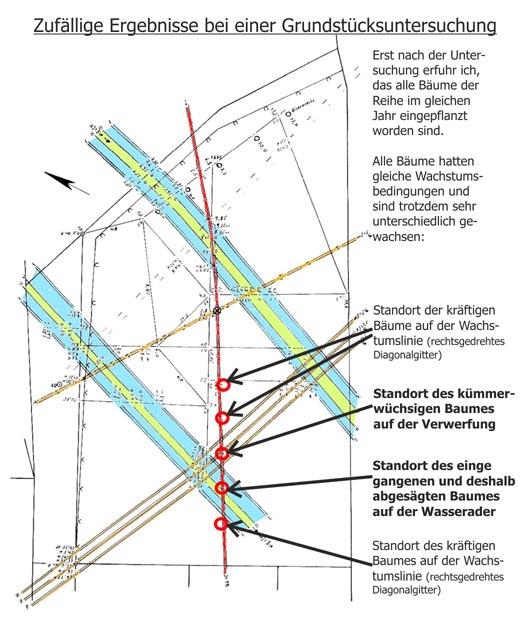 Ergebnisse bei einer Grundstücksuntersuchung: Standorte von kümmer- wüchsigen und einge gangenen Bäumen auf Erdstrahlen